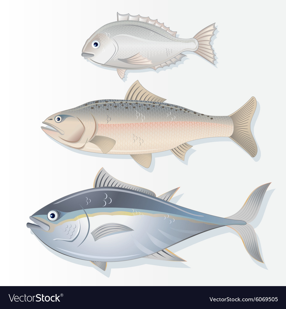 Set of Edible Fishes Dorado Salmon and Tuna
