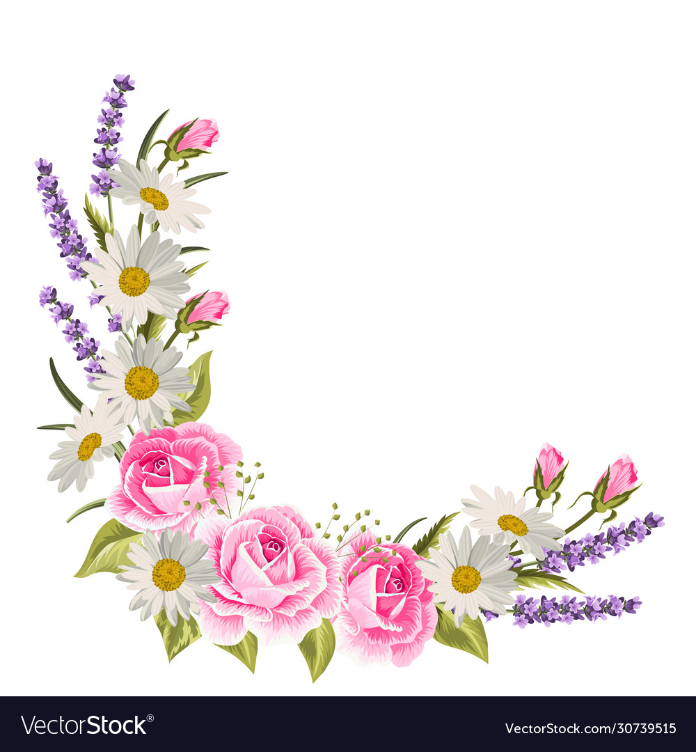 Beautiful pink roses and lavender flowers on white