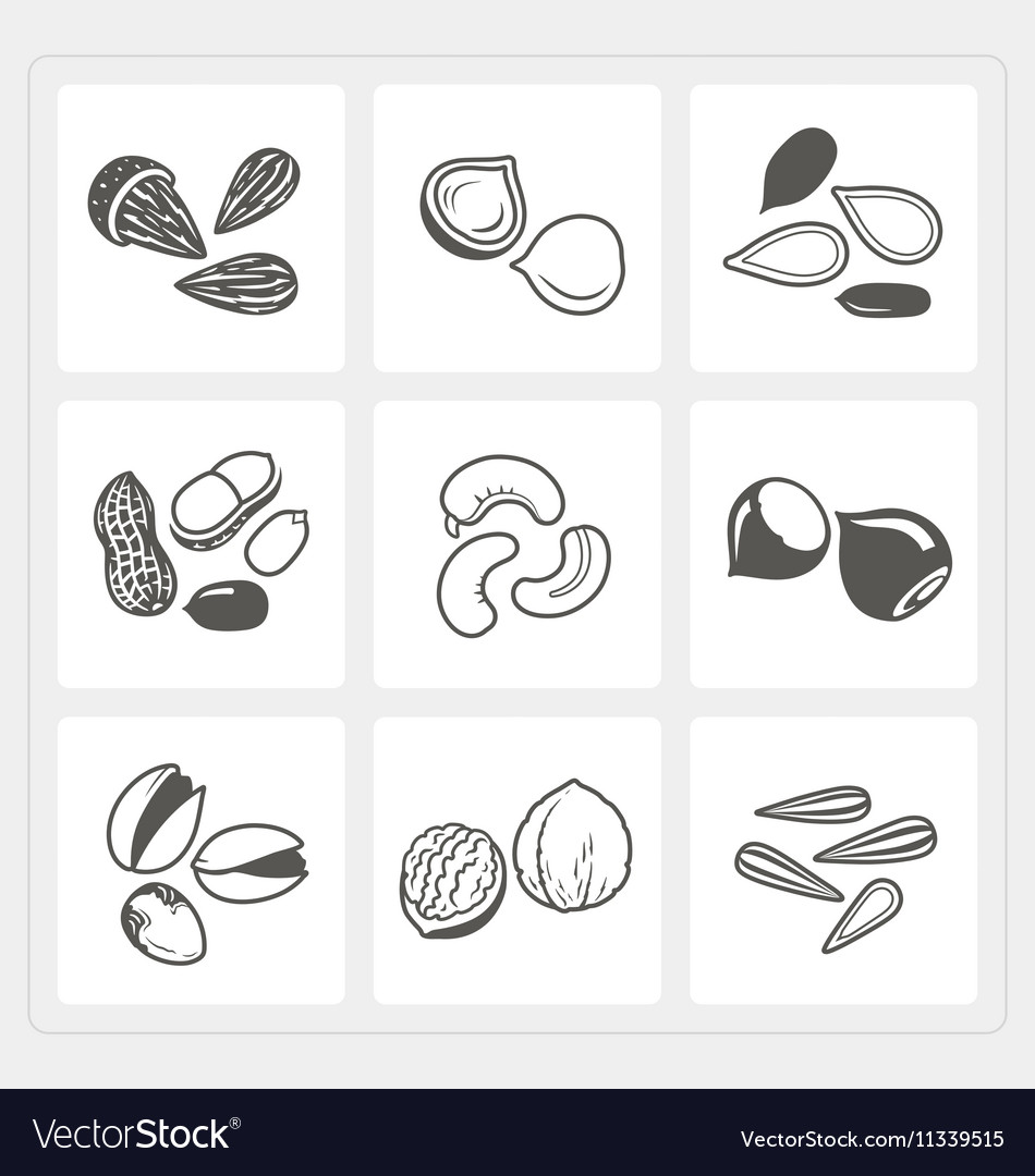 Nut icons set vector image