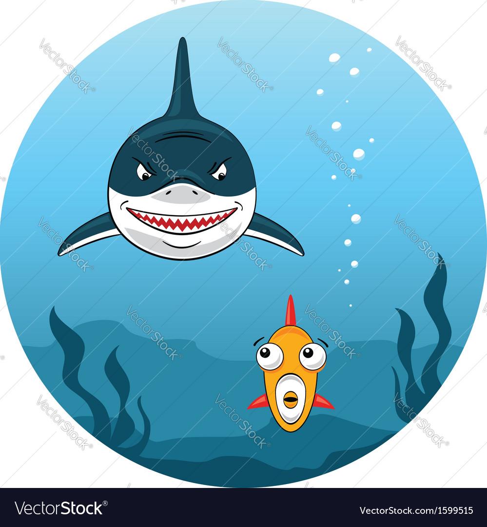 Shark hunting for small fish