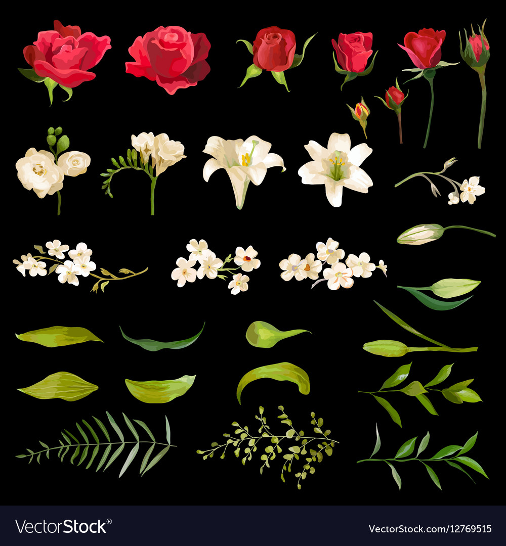 Vintage lily and rose flowers set in watercolor vector image izmirmasajfo