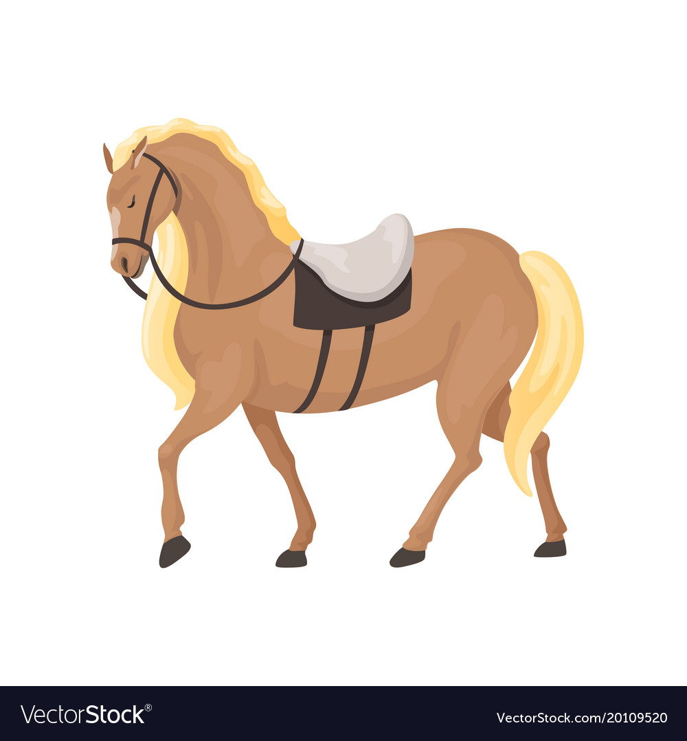 Thoroughbred horse equestrian professional sport vector image