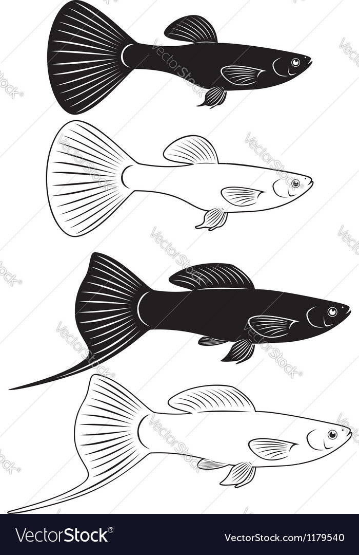 Aquarium Fish Royalty Free Vector Image Vectorstock