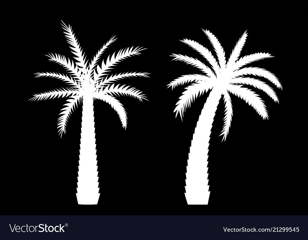 Beautiful black and white palm tree leaf