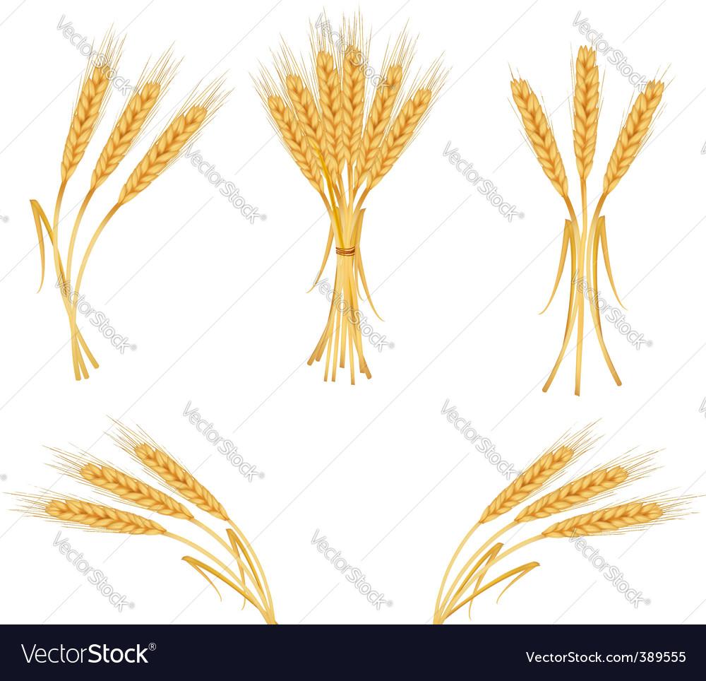 Wheat harvest vector image