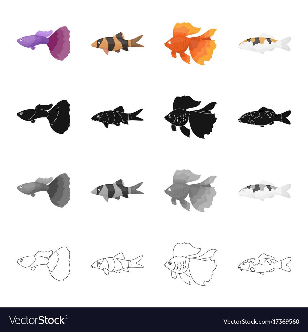 Different types of aquarium and marine fish