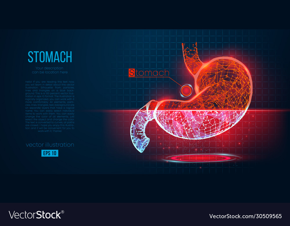 Abstract silhouette polygonal organ stomach