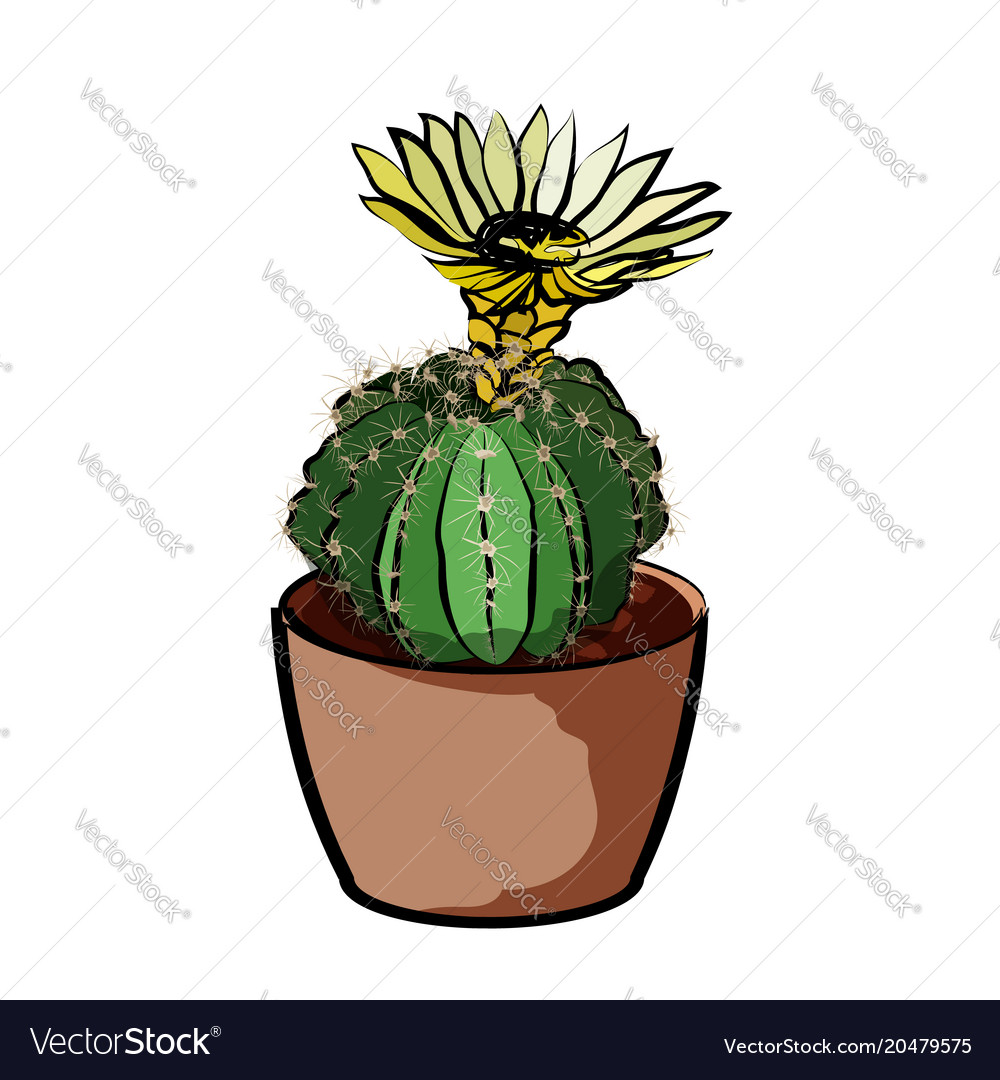 Flowering cactus in a clay pot element of home