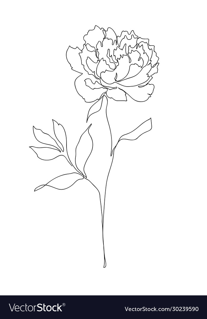 Beautiful Peony Flower Line Art Royalty Free Vector Image