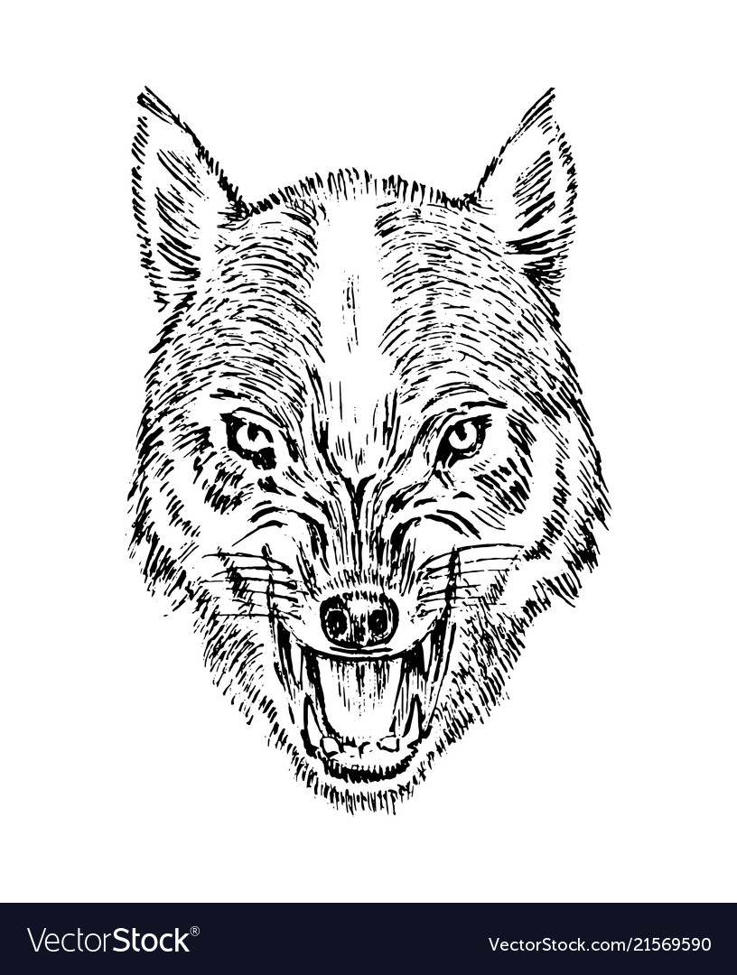 Portrait wolf head and a wild animal angry