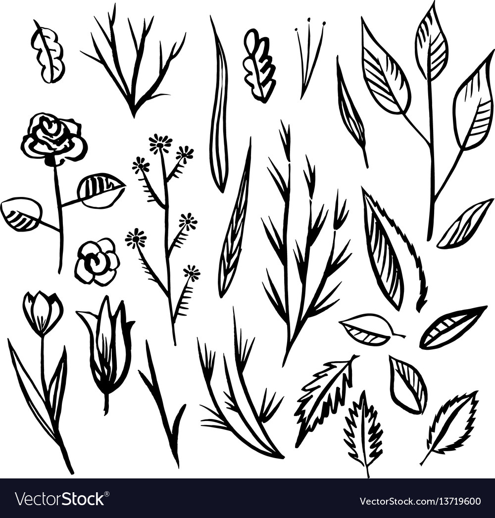 Floral designs detail sketc