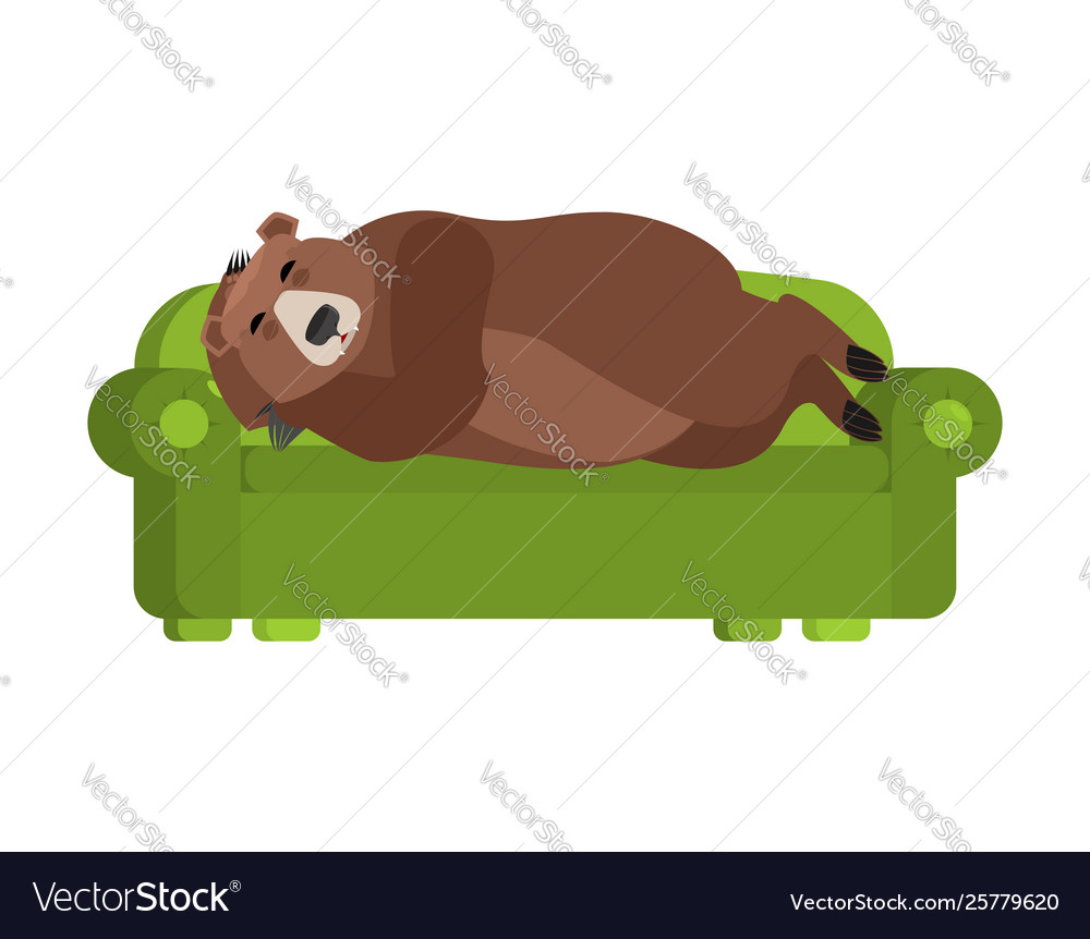 Pleasing Bear Sleeps On Couch Grizzly Asleep On Bed Wild Machost Co Dining Chair Design Ideas Machostcouk