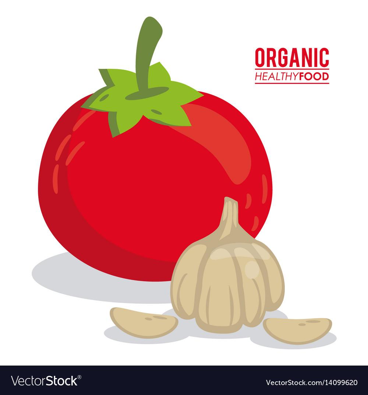 Organic healthy food tomato and garlic vector image