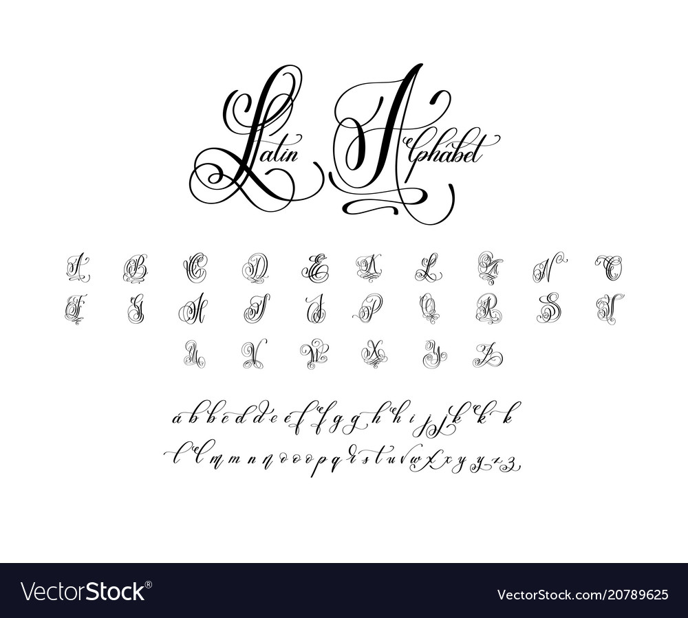 Hand written luxury latin alphabet design vector image
