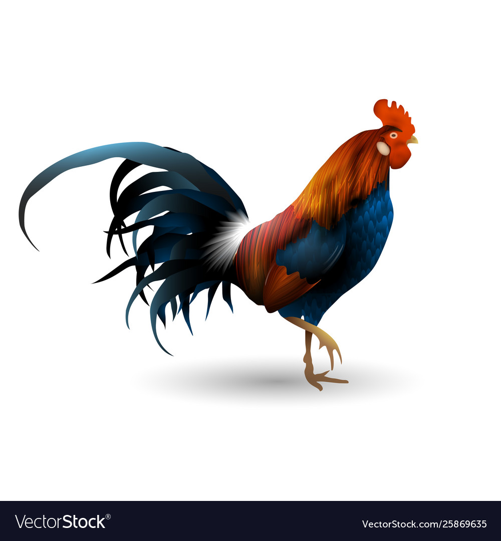 Rooster isolated realistic style