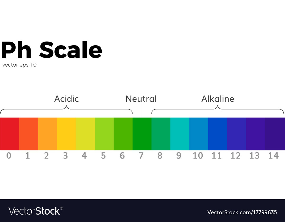 the ph scale vector image
