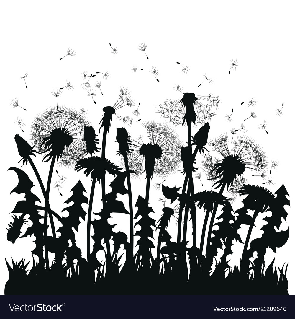 Field of dandelion flowers black silhouettes of