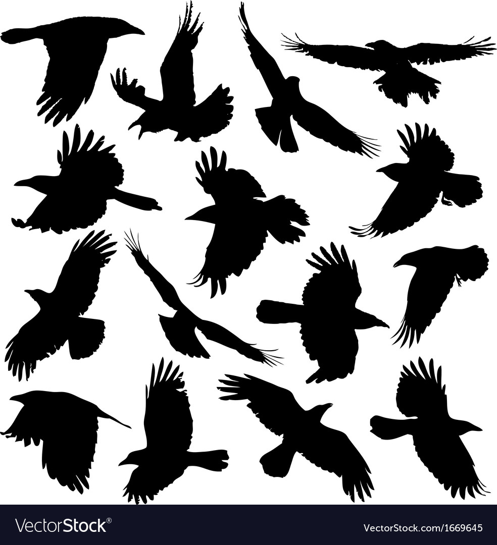 Crow Silhouette Set 01 Royalty Free Vector Image They have the biggest cerebrum of all winged animals aside from parrots. vectorstock