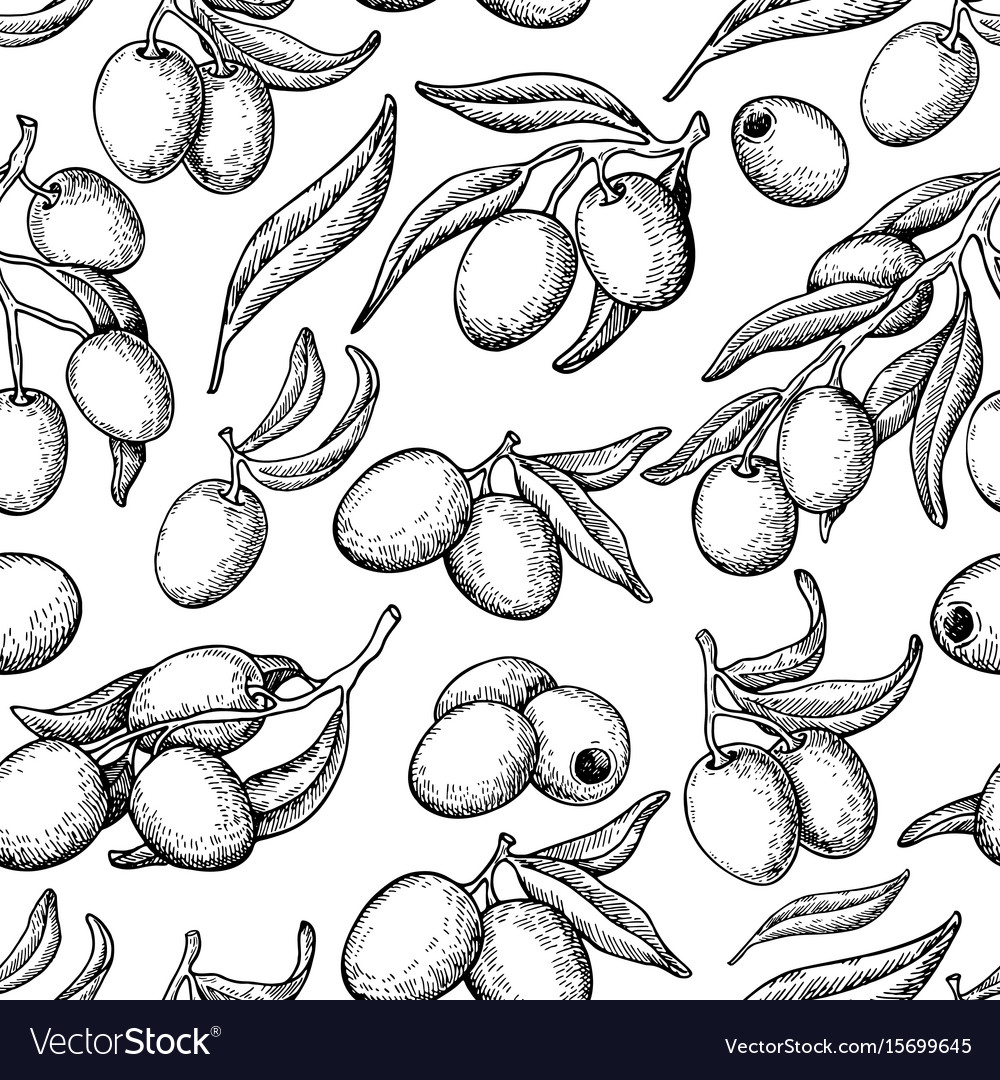 Olive seamless pattern hand drawn vector image