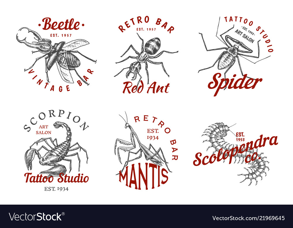 Set of insects logos vintage pets labels for bar