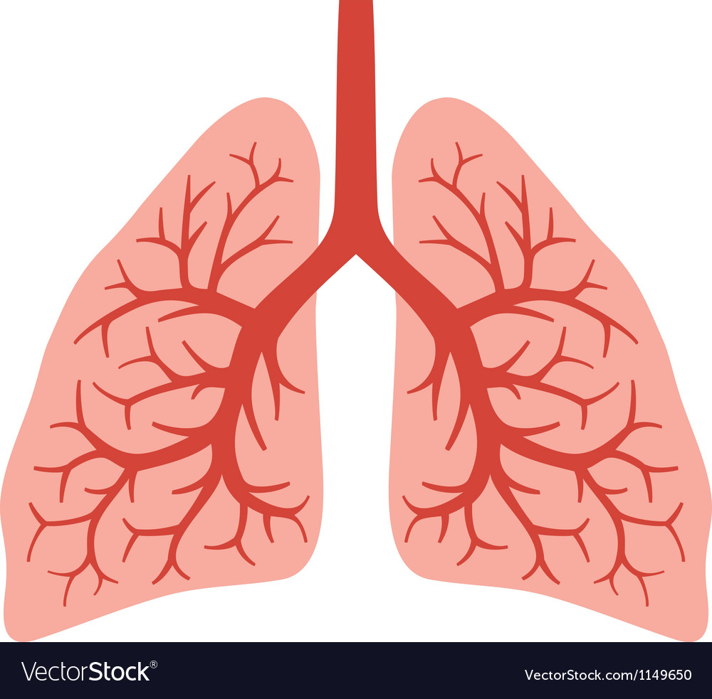 Human Lungs Royalty Free Vector Image Vectorstock