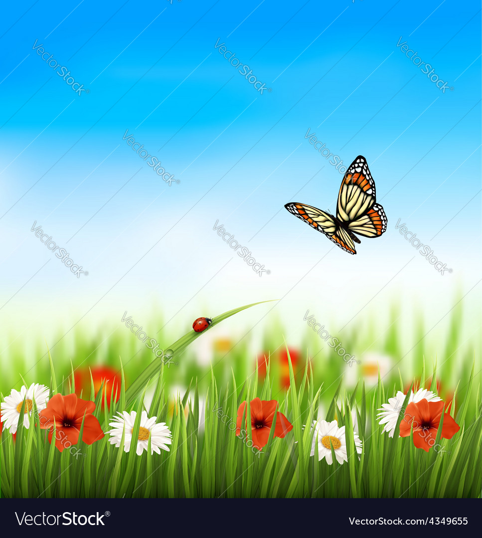 Nature summer colorful flowers with butterfly