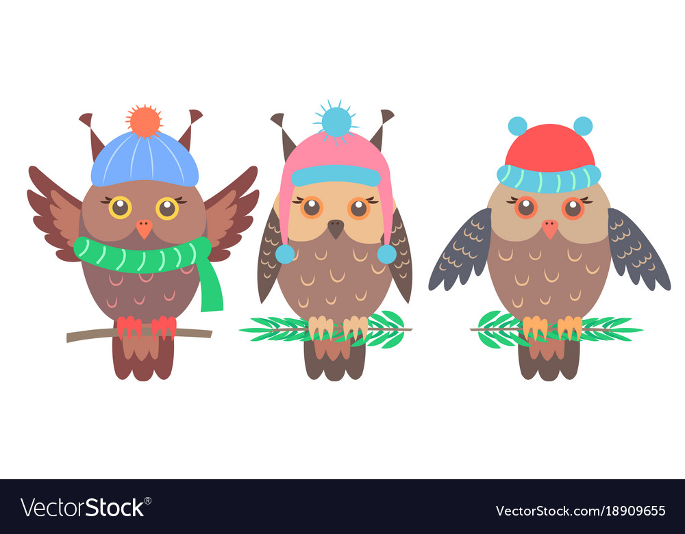 Set of funny owls on branches