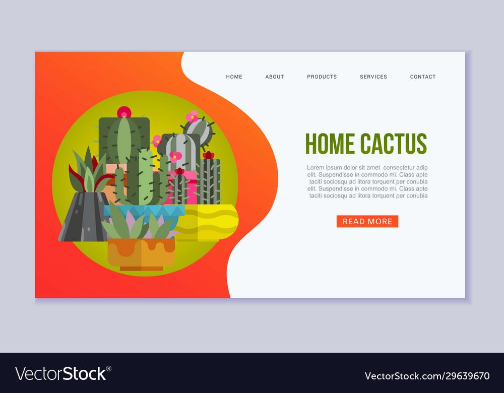 Cactus succulents and plants in pots web