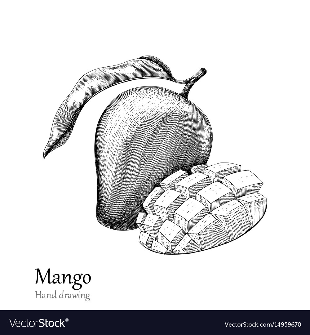 Pictures Of Mango To Draw