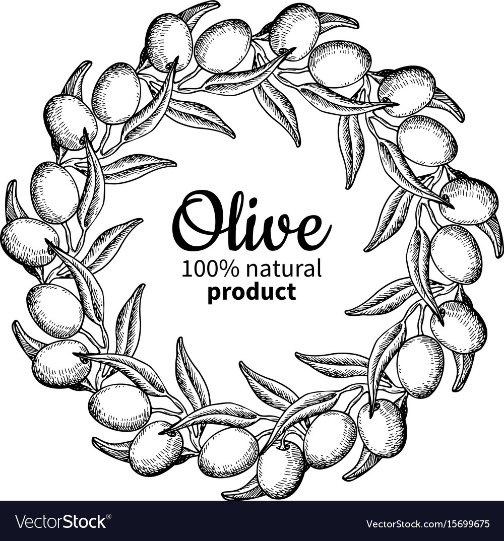 Olive wreath hand drawn of