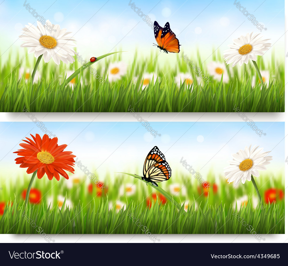 Summer nature banners with colorful flowers and