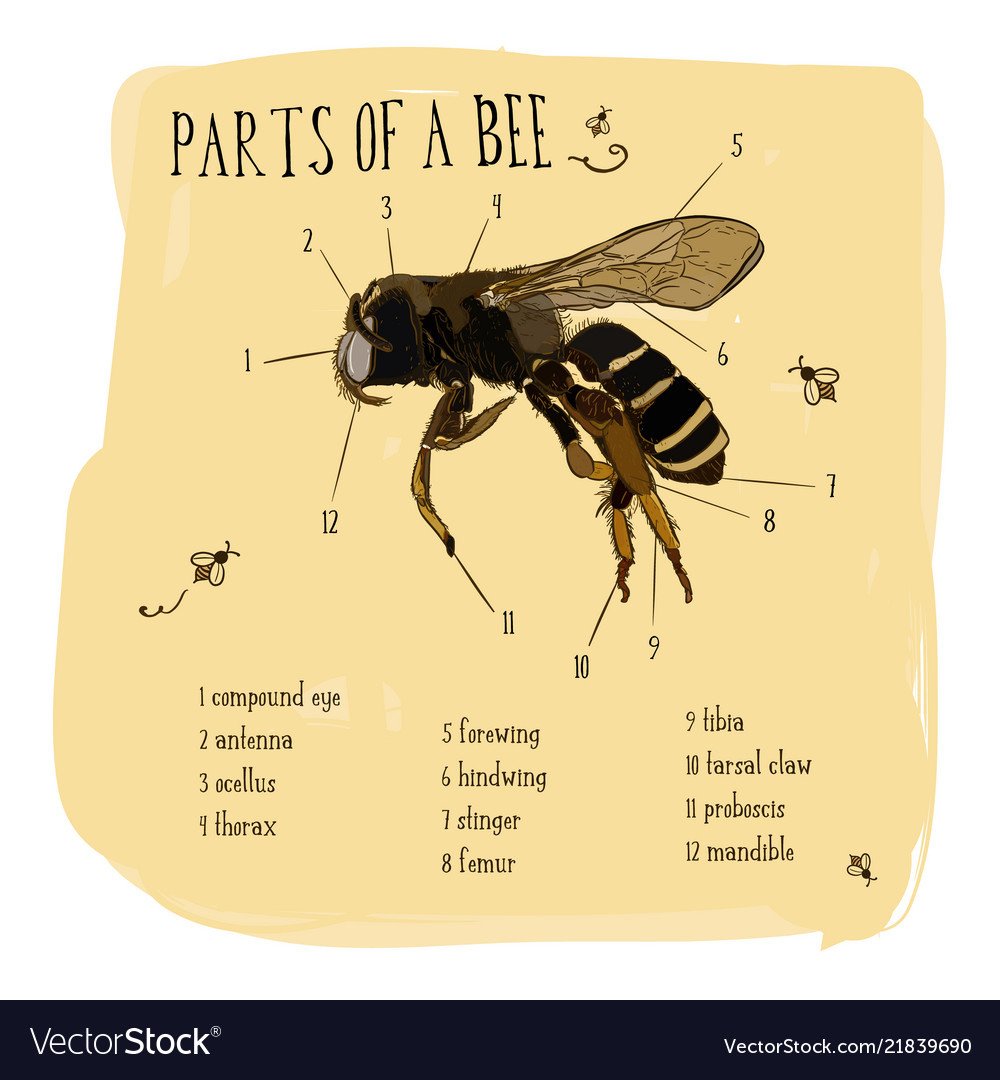 Engraving part of honey bee