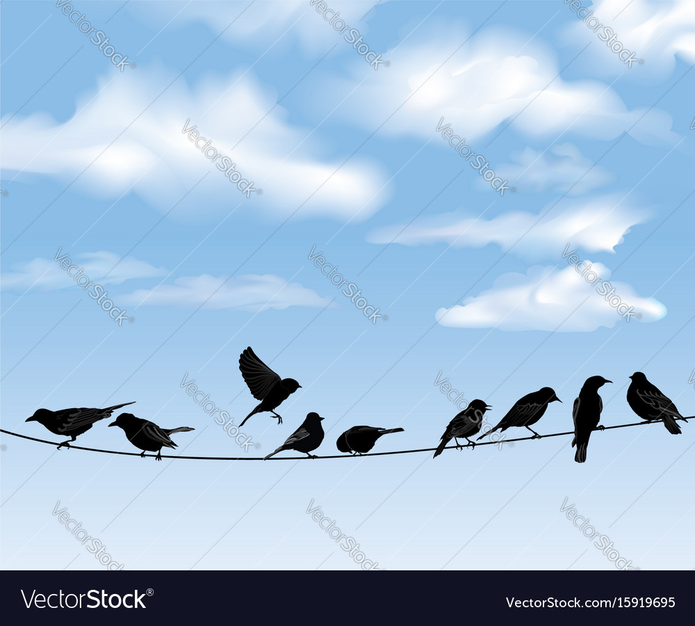 Birds on wires over blue sky background wild vector image