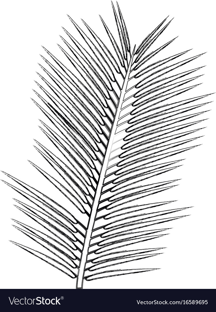 Tropical palm leave jungle leaf floral