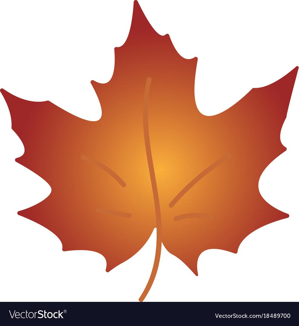 Autumn leaf autumn maple leaf isolated on a white