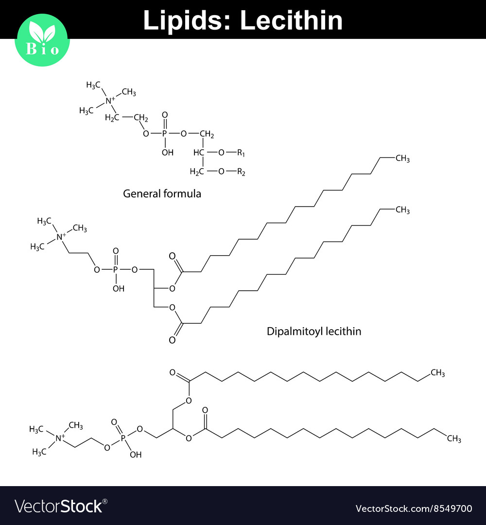 Lecithin chemical structure vector image