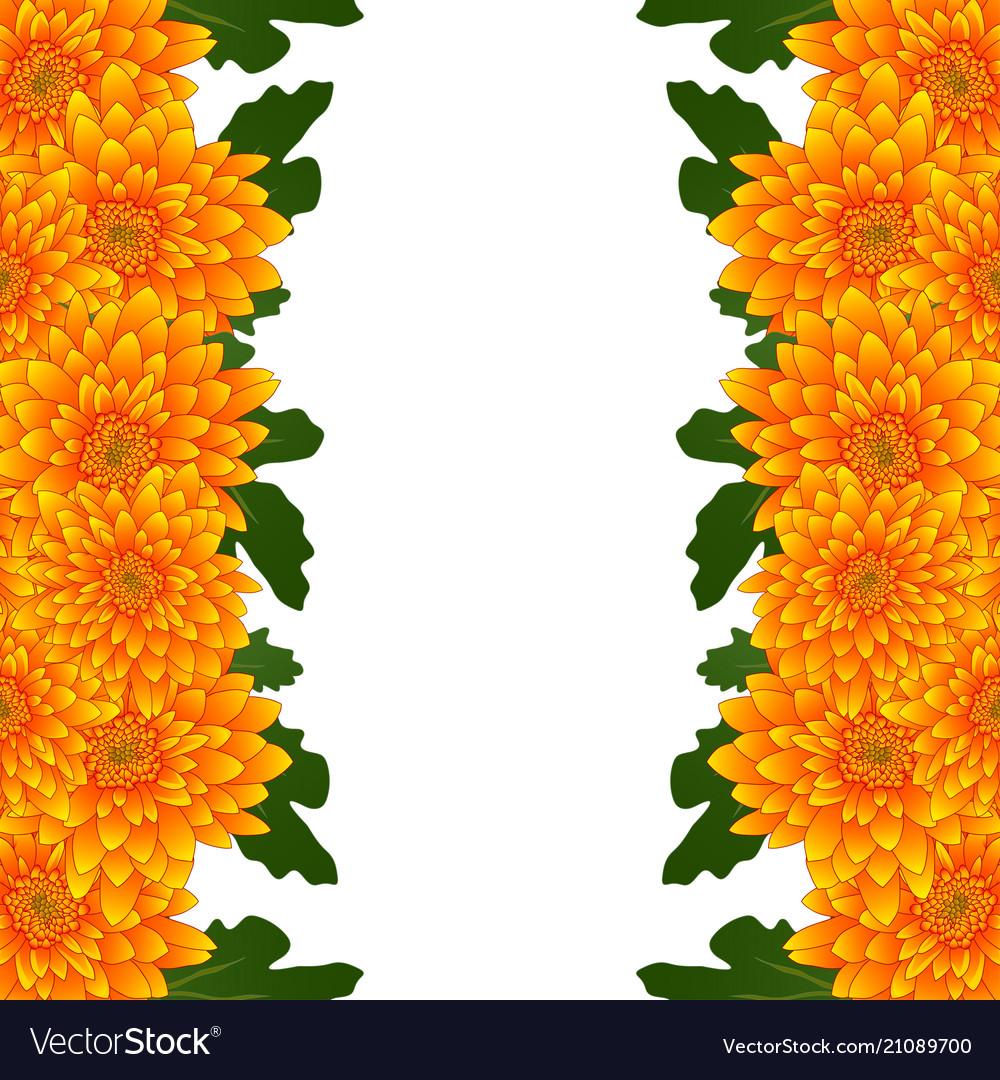 Yellow Mum Chrysanthemum Flower Border Royalty Free Vector
