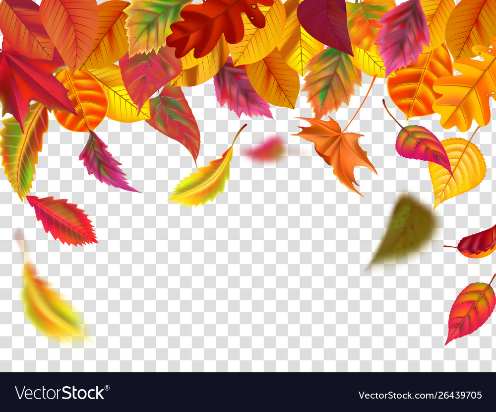 Autumn leaves fall falling blurred leaf autumnal
