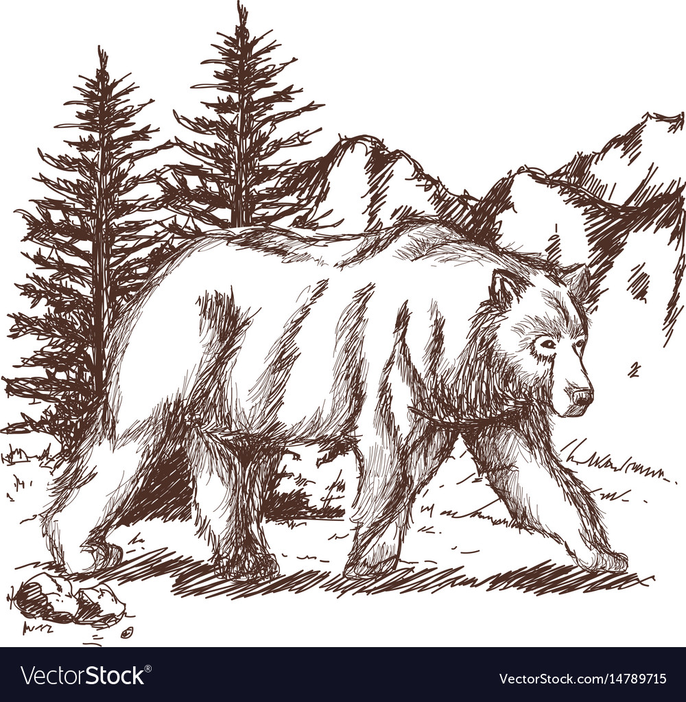 Animal wild bear landscape hand-drawing vector image