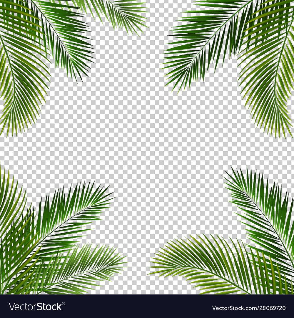 Frame with palm leaf isolated transparent