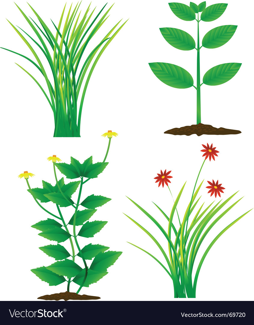 Grass and plants vector image