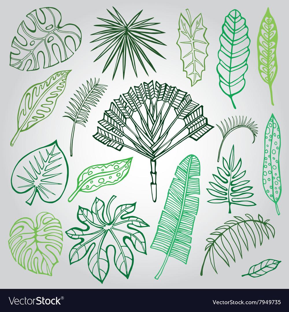 Tropical palm leavesbranches setOutlineGreen vector image
