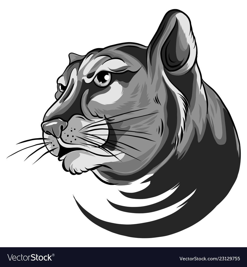 378e20c30f6 Cougar panther mascot head Royalty Free Vector Image