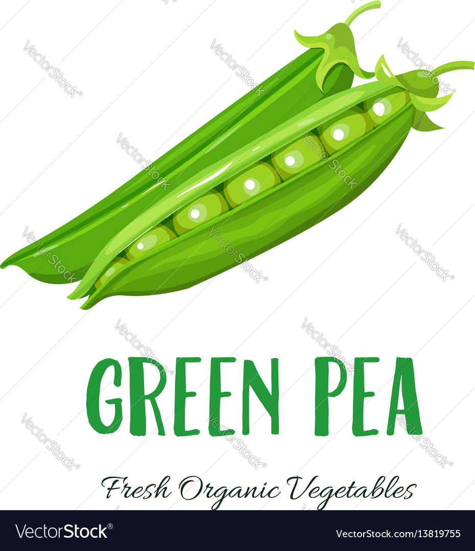 Green pea vegetable vector image