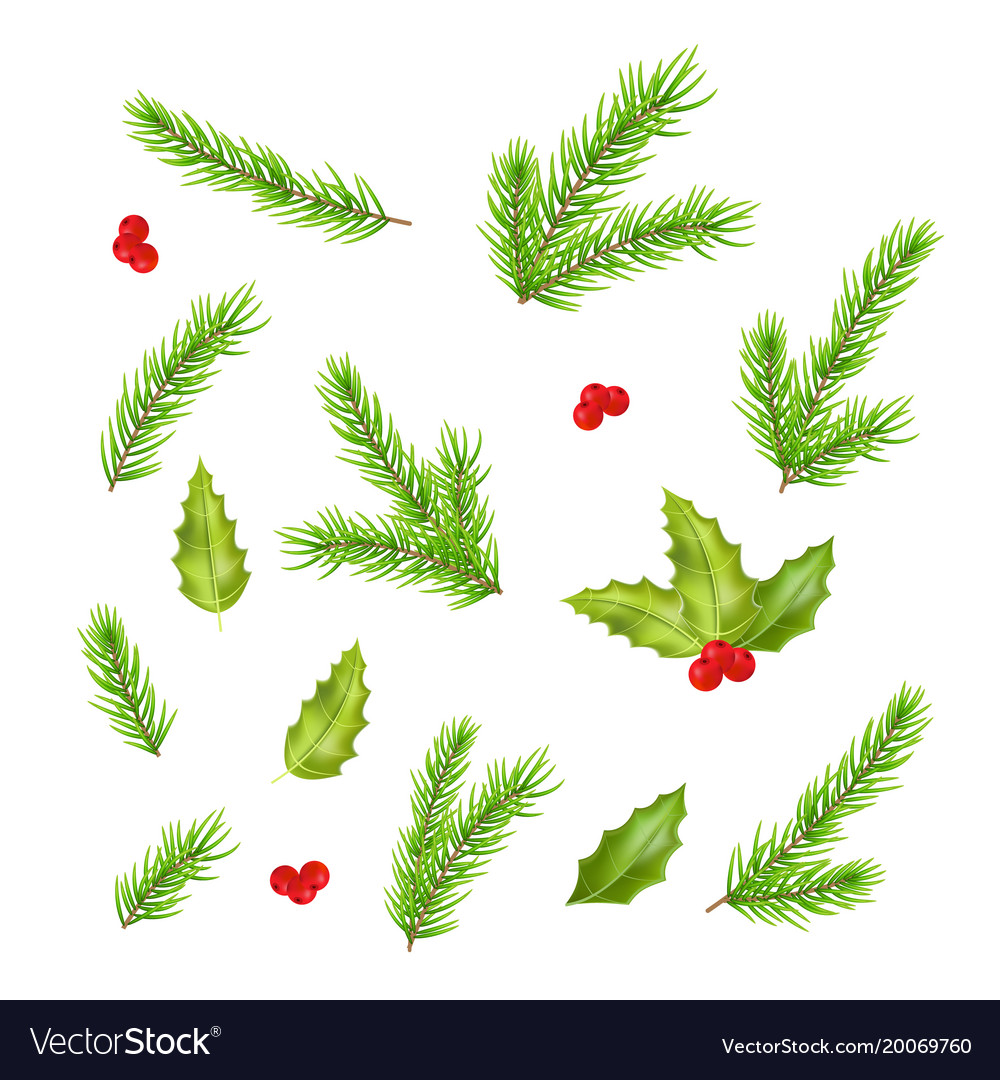 Branches of fir tree and holly leaves