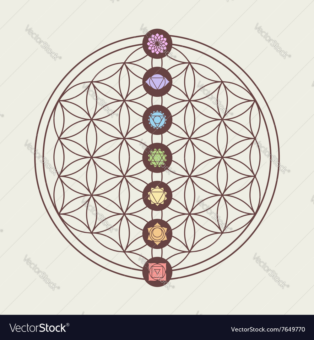 Chakra icons on sacred geometry design vector image
