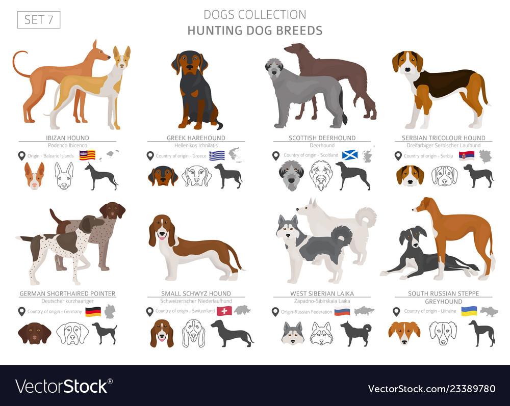 Small Hunting Dog Breeds Goldenacresdogs Com