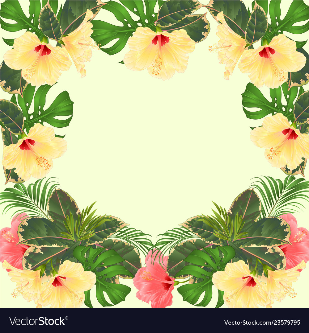Frame Tropical Flowers Hibiscus Royalty Free Vector Image