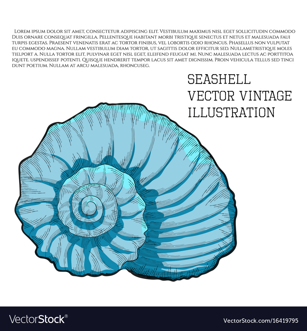 Seashell vintage stylized as hand-drawn sketch