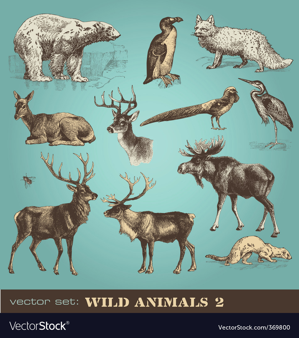 Wild animals set 2